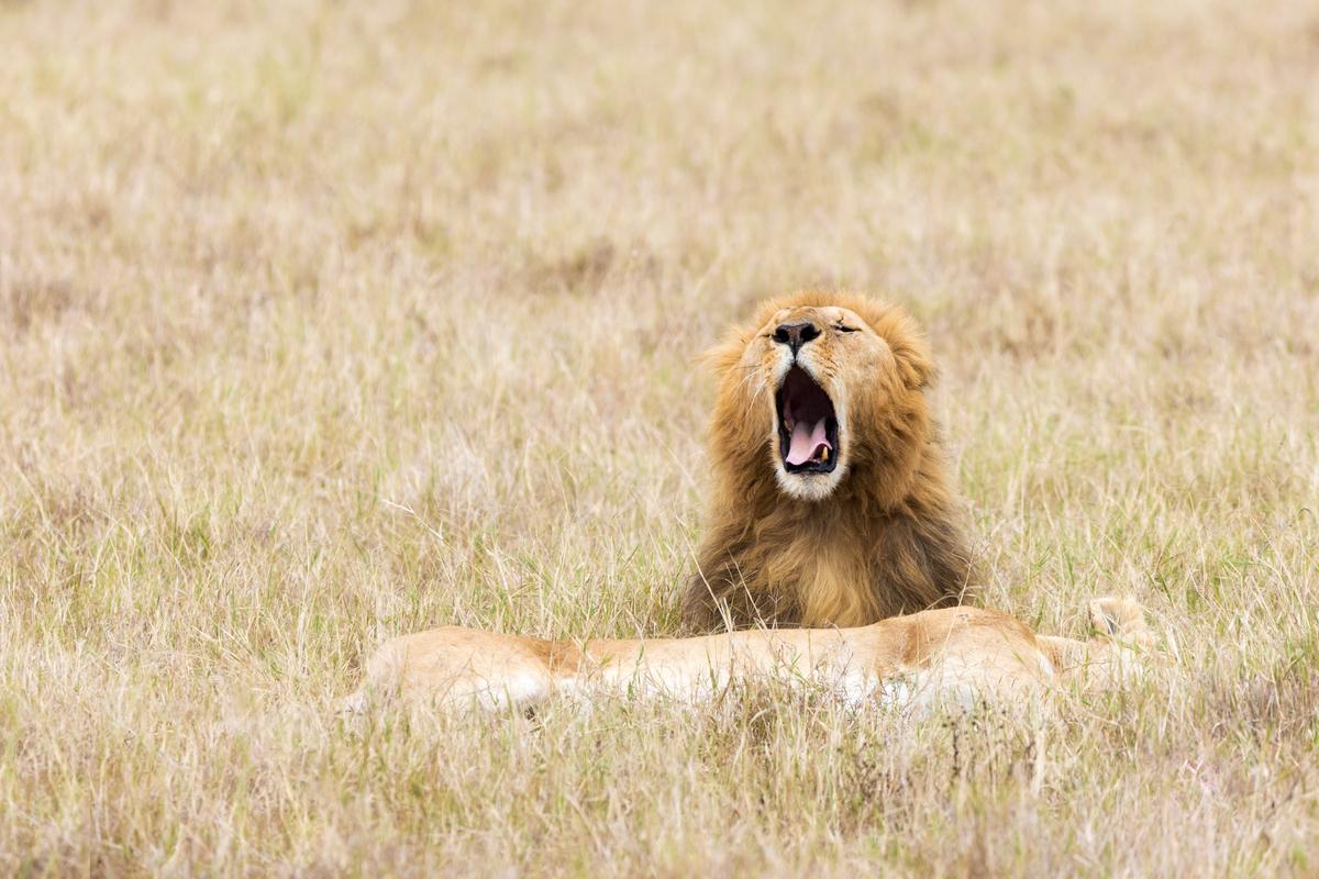 Animale sălbatice în habitatul natural: Top 5 locații pentru vacanțe greu de uitat